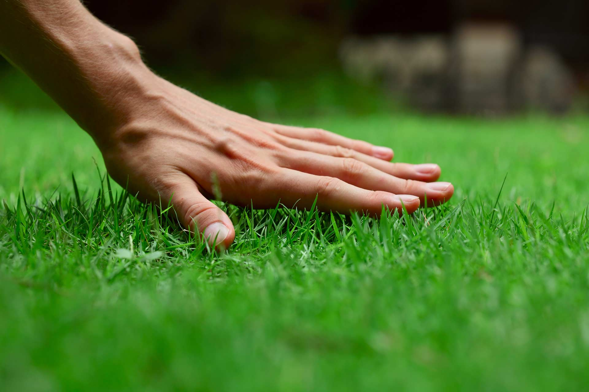 A hand on healthy green grass